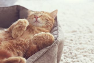 Pampering Your Feline with the Right Cat Bed