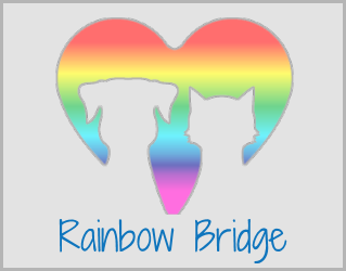 Share your Rainbow Bridge story