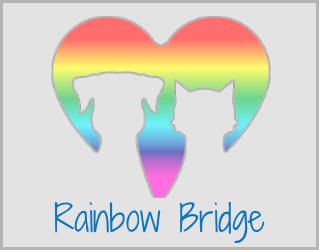 Share your Rainbow Bridge story