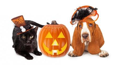 halloween pet hazards