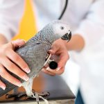 vet-with-african-gray
