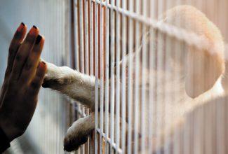 quarantine puppy in cage
