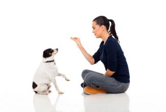 woman training puppy to sit and beg
