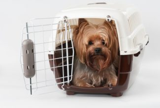 opened pet travel plastic carrier with yorkshire terrier inside