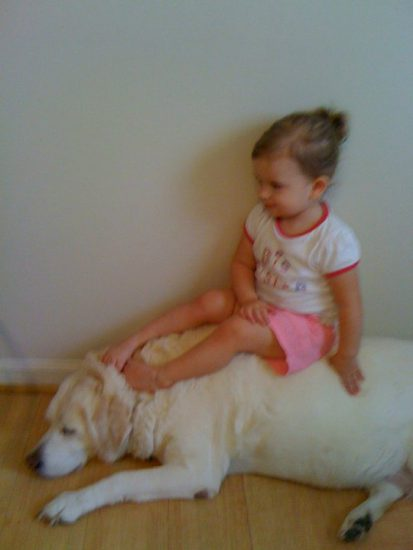 Little girl sitting happily on the back of a golden retriever.