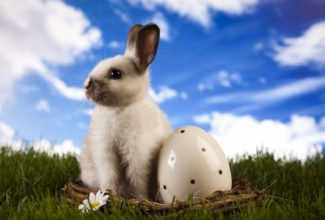 This bunny's excited about our pet oriented blog hop!