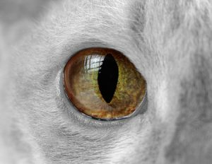 cat's eye with pupil slit