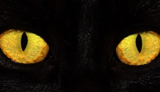 black cat's eyes glowing in the dark