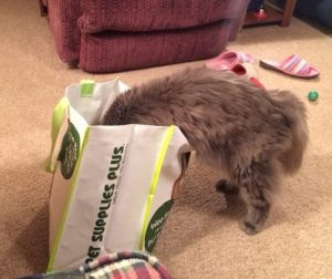 Sir Jack inside a swag bag sniffing out the Natural Balance Green Pea and Chicken samples