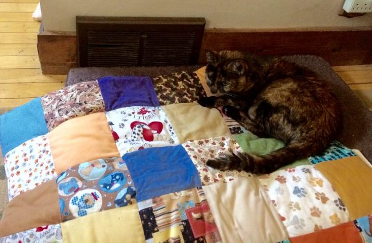 Cats rule over dogs, and Peanut Butter proves it by staking out her territory on Soldier's dog quilt.