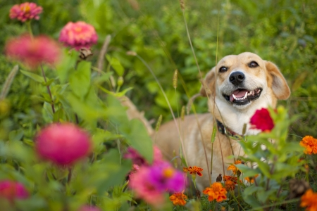 happy smiling mixed breed dog in flower garden