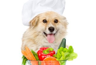 Dog chef with fresh vegetables and fruits