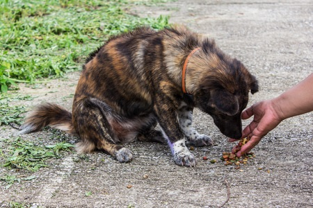 Taking care of a lost pet or stray