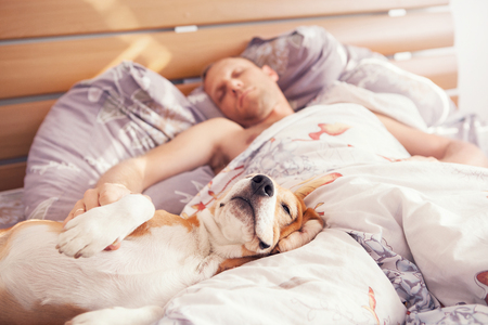 Nine great reasons for sleeping with dogs or pets