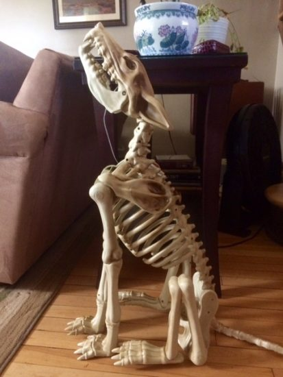 Bone dog skeleton