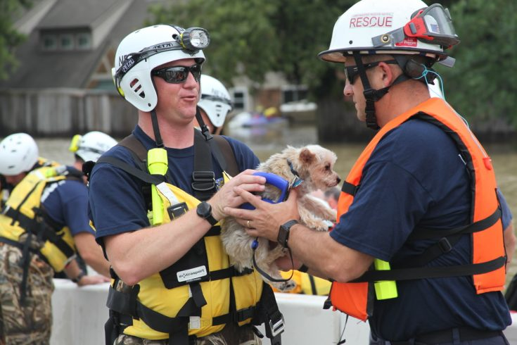 August 30, 2017 - Members of FEMA's Urban Search and Rescue Nebraska Task Force One (NE-TF1) rescue a pet from floodwaters of Hurricane Harvey.