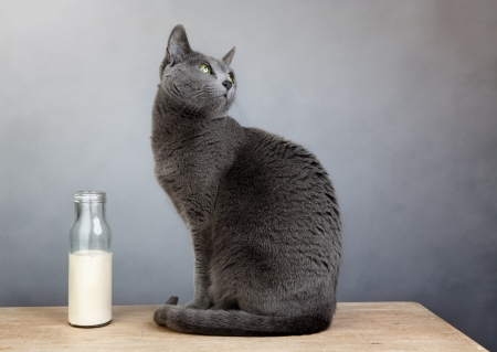 cat myths say cats should drink milk