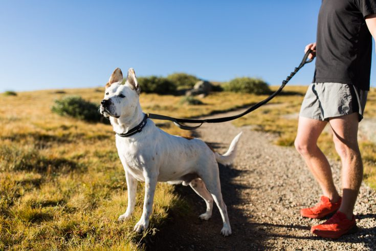 Leash and Harness System for active lifestyles