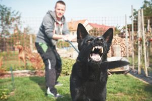 If you can't control your pet after proper dog training, an animal behaviorist may be needed.