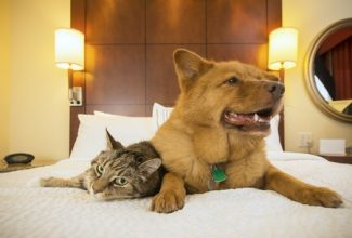 Cat and dog in a pet friendly hotel on the bed