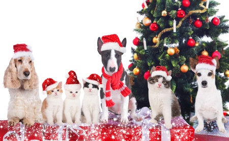 Christmas tree with pets and the best pet gifts