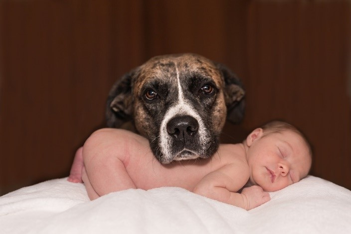 Dog and baby, with Dog resting chin on sleeping baby