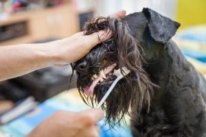 Everyone's New Year's resolutions for pets should include proper dental care.
