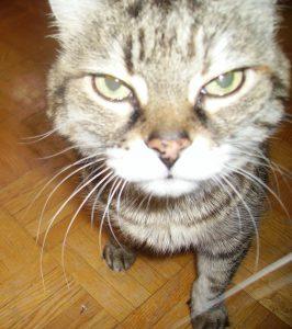 Hindy's cat