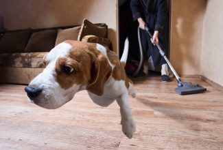dog anxiety vacuum cleaner